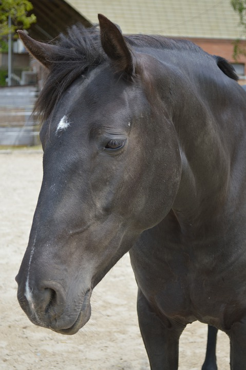 Animal, Cavalry, Mammal, Mare, Stallion