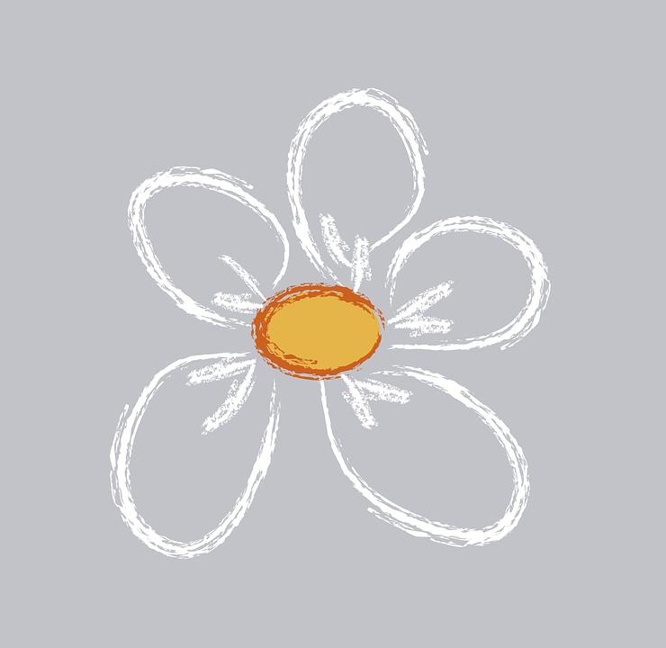 Daisy, Flower, Margarita
