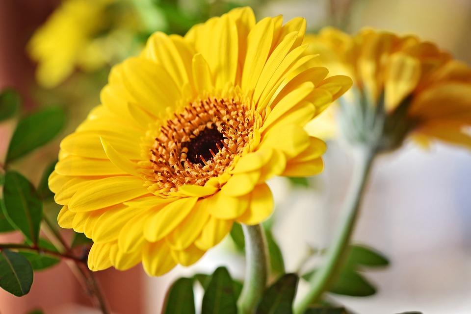 Marguerite, Flower, Blossom, Bloom, Orange, Yellow