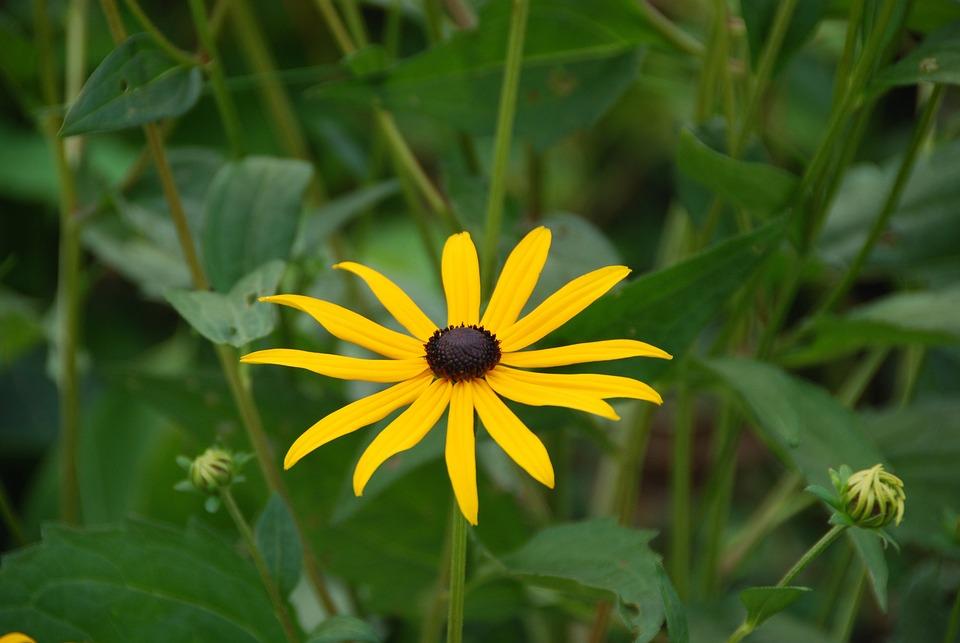 Marguerite, Yellow, Blossom, Bloom, Flower, Bloom