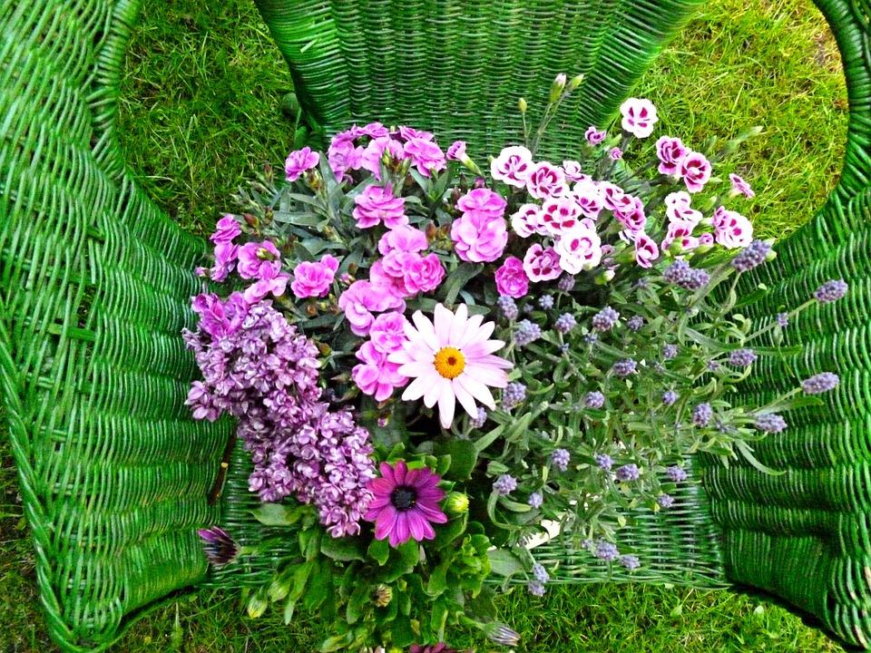 Flowers, Carnation, Marguerite, Lilac, Plant