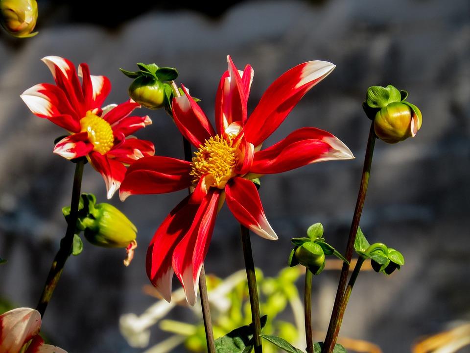 Spring, Flower, Spring Flower, Marguerite, Macro