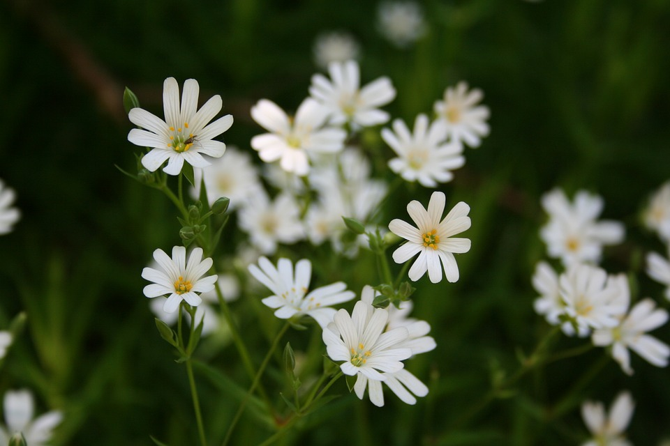 Marguerite, Spring, Daisy, Flowers