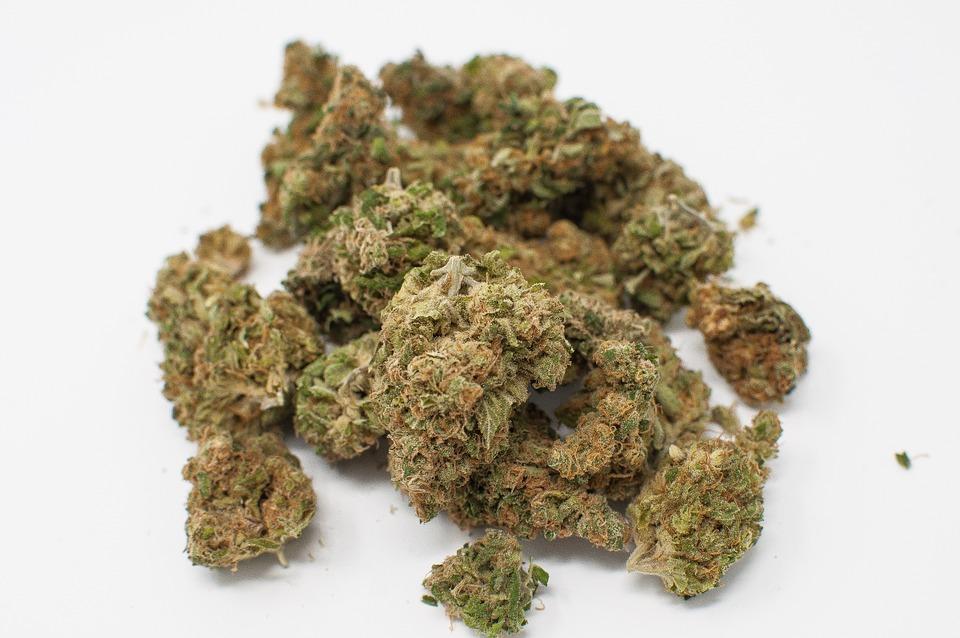 Herbal, Alternative, Herb, Bud, Addiction, Marijuana
