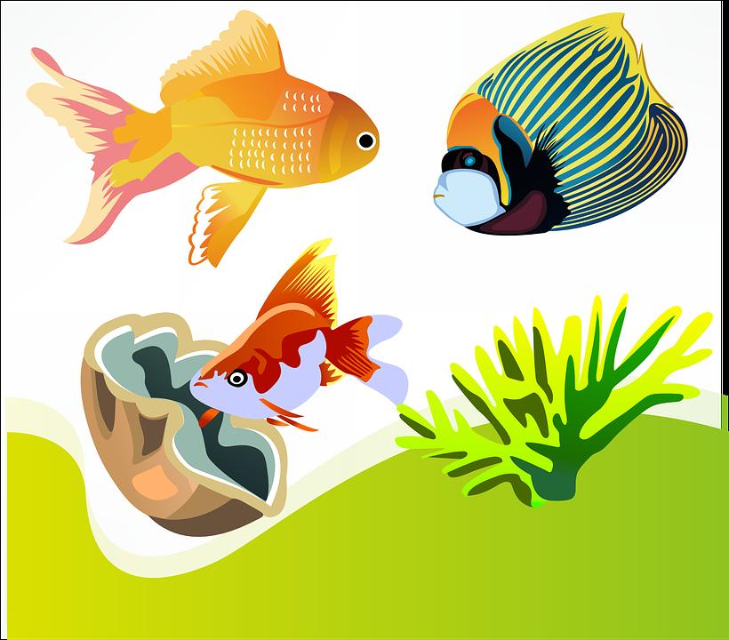 Fish, Goldfish, Marine Diversity, Ornamental Fish