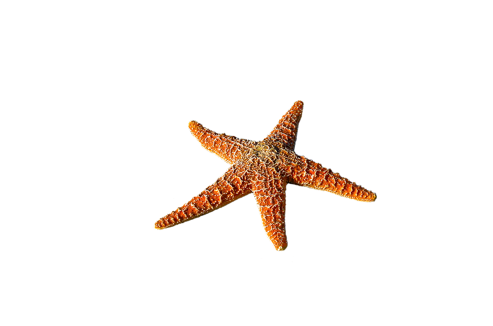 Starfish, Spur, Sea, Prickly, Marine Life, Sea Animal