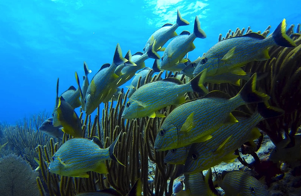 Underwater, Fish, Underwater World, Marine Life, Diving