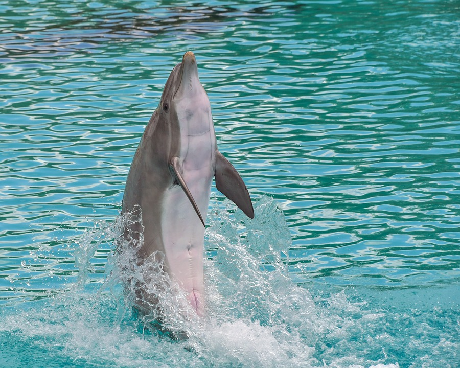 Dolphin, Standing, Back, Happy, Water, Marine Mammal