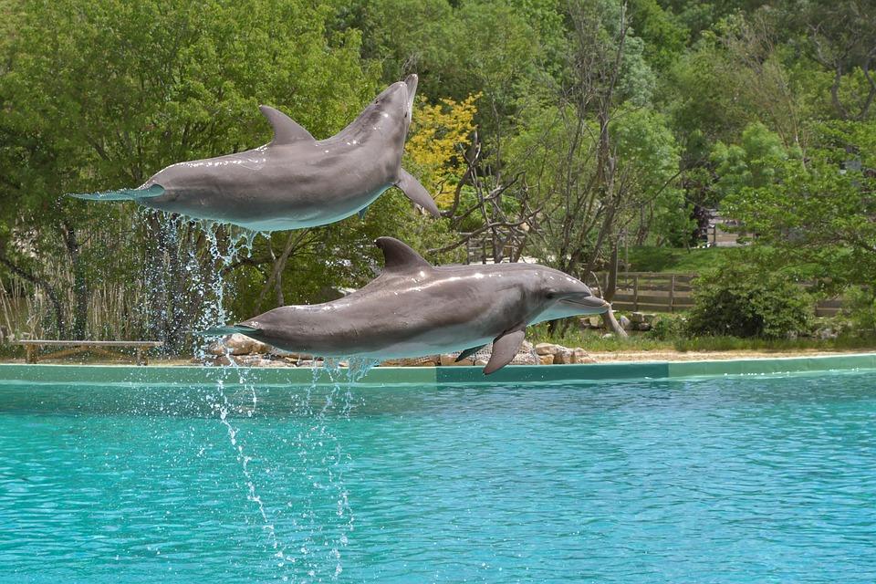 Dolphin, Jump, Two, Water, Marine Mammal, Cetacean
