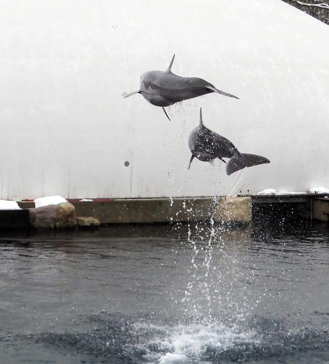 Dolphin, Sea, Marine Mammals, Jump