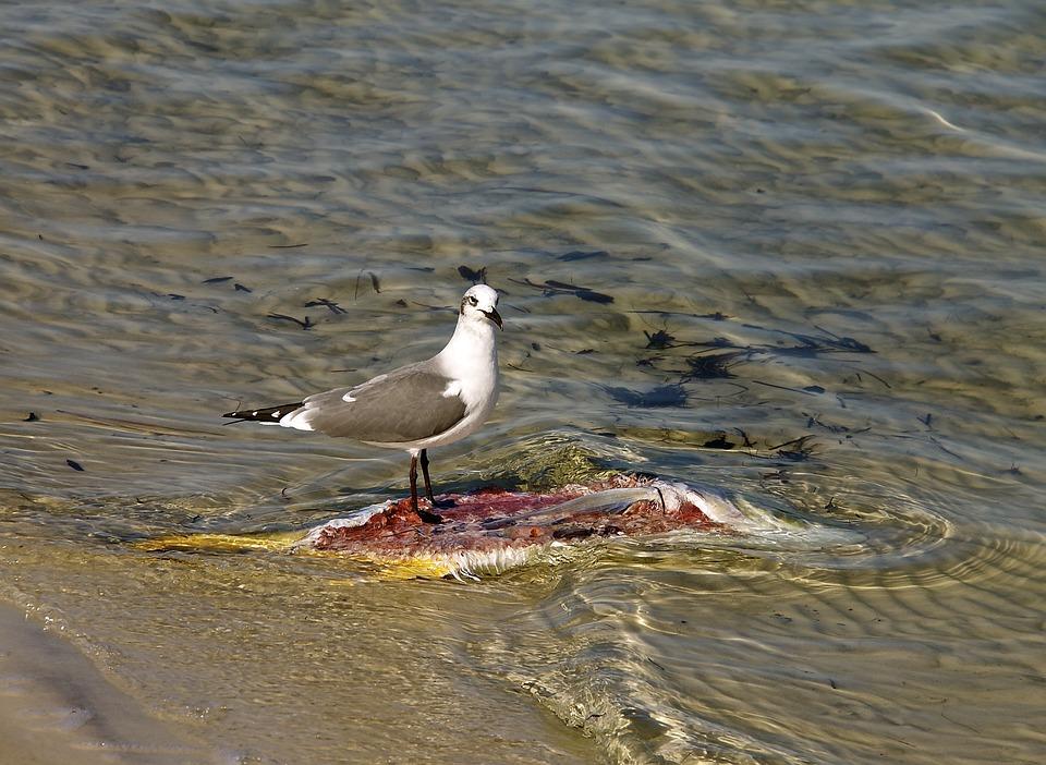 Seagull, Fish, Water, Ocean, Marine, Nature, Bird