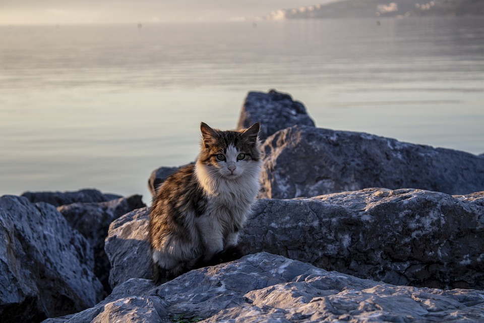 Cat, Animal, Beach, Marine, Sunset, Stone, Posing, Pose