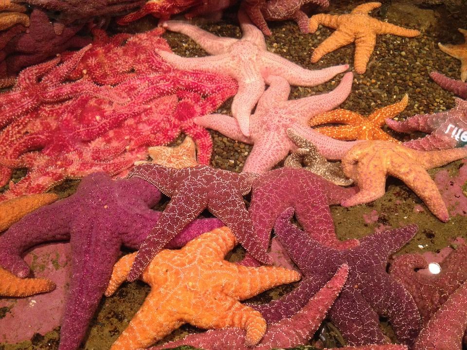 Starfish, Red, Orange, Violet, Aquarium, Marine, Star