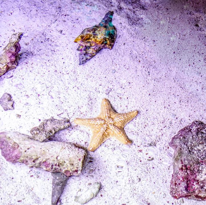 Starfish, Coral, Water, Nature, Sea, Animal, Marine