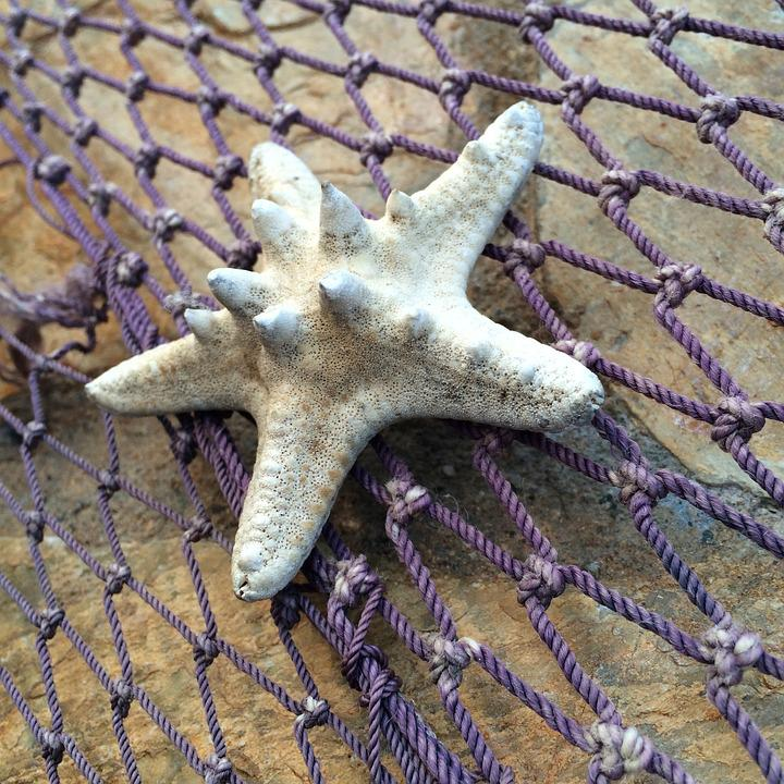 Starfish, Fishing Net, Marine