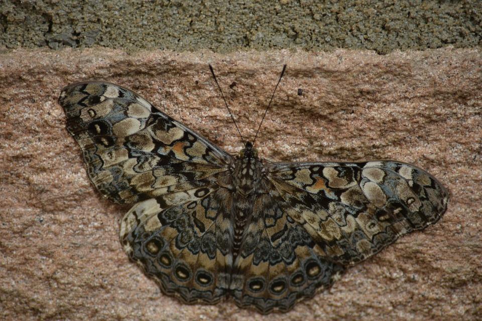 Moth, Mariposa, Butterflies, Insect, Beautiful, Nature