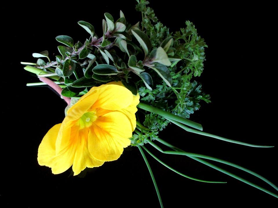 Culinary Herbs, Parsley, Chives, Marjoram, Primrose