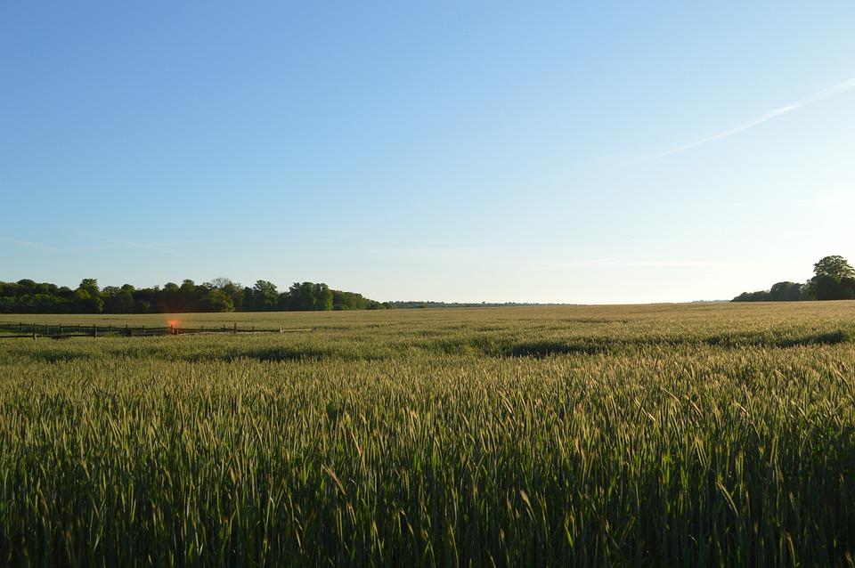 Mark, Horizon, Wheat, Sky, Natural, Blue Sky, Landscape