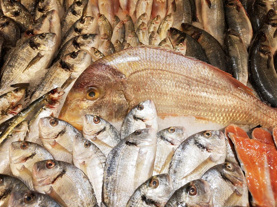 Fish, Food, Market, Nutrition, Raw, Fresh, Delicious