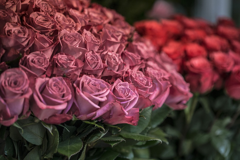 Roses, Flower, Market, Nature, Love, Petal, Floral