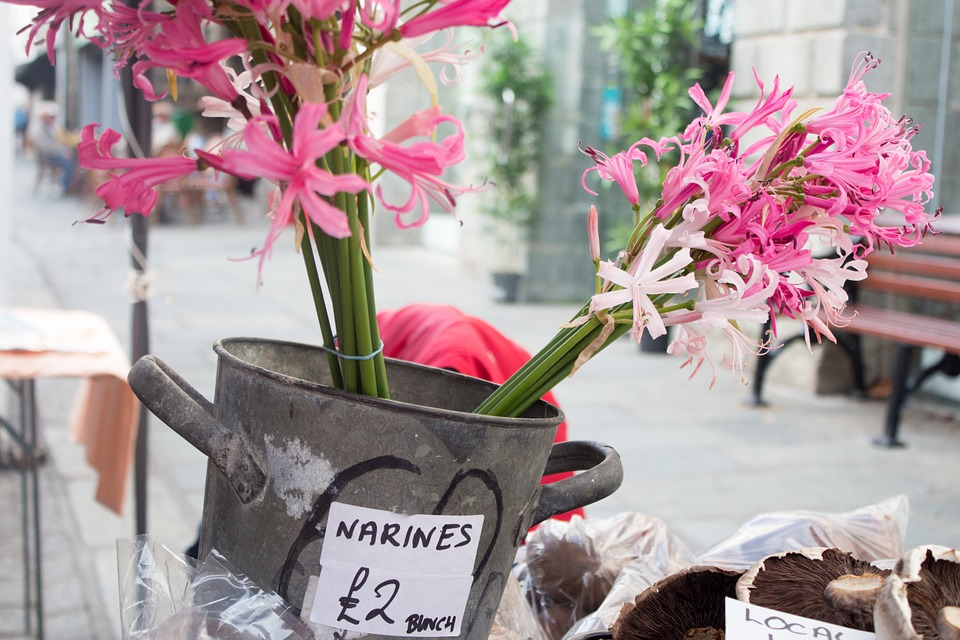 Nerines, Market, Flowers, Stall, Pink