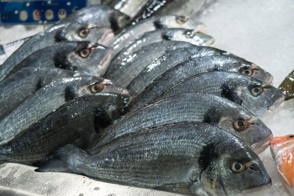 Fish, Food, Market, Raw, Seafood, Meal, Eat, Fresh, Ice