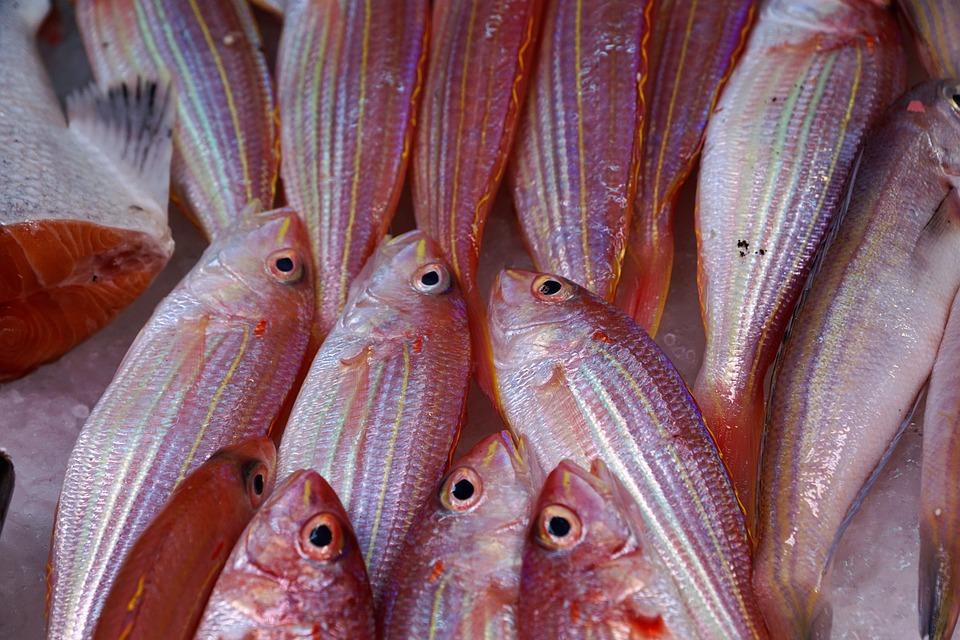 Fish, Seafood, Sea, Market, Ocean