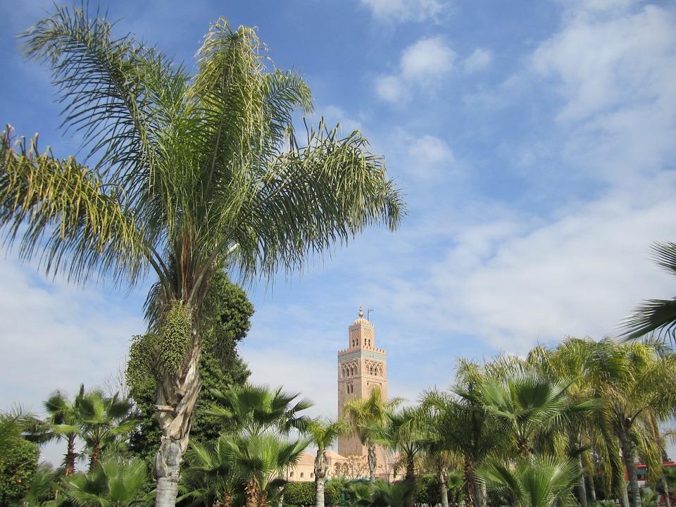 Palm Tree, Marrakech, Morocco