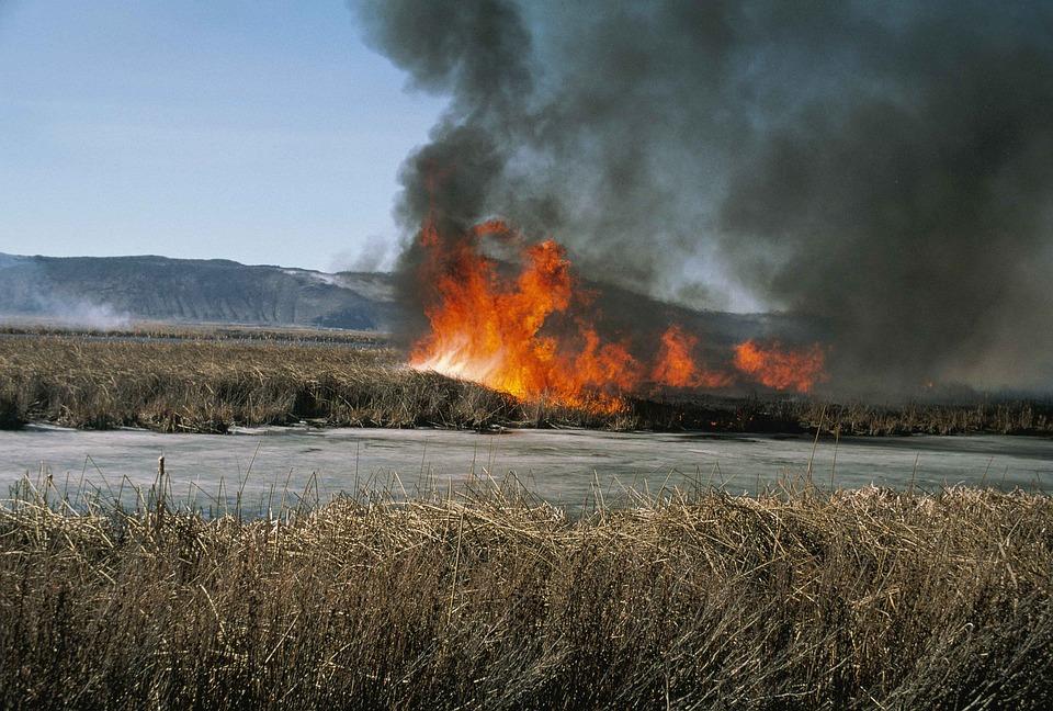Smoke, Growth, Plant, Heavy, Showing, Grasses, Marsh