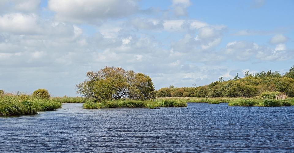 Marsh, Brière, Loire Atlantique, Water, Landscape
