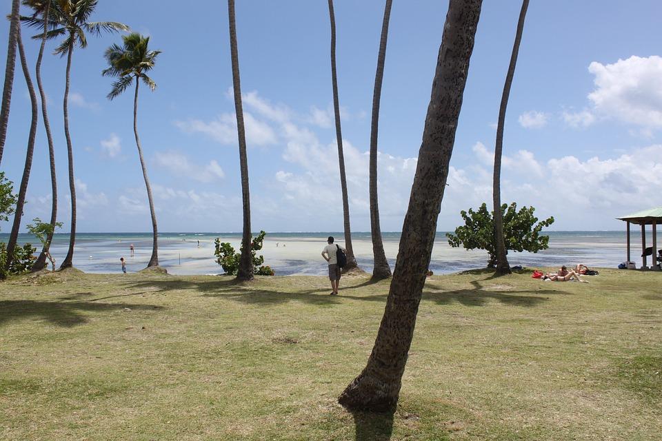 Martinique, Beach, Ocean, Sea, Holiday