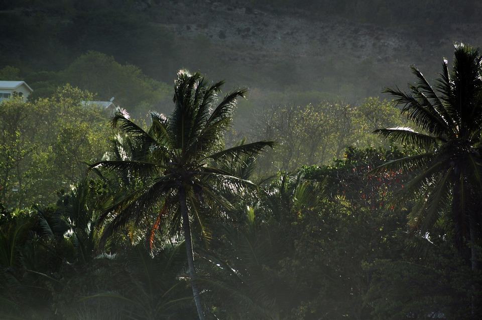Martinique, Caribbean, Tropics, Palm, Landscape