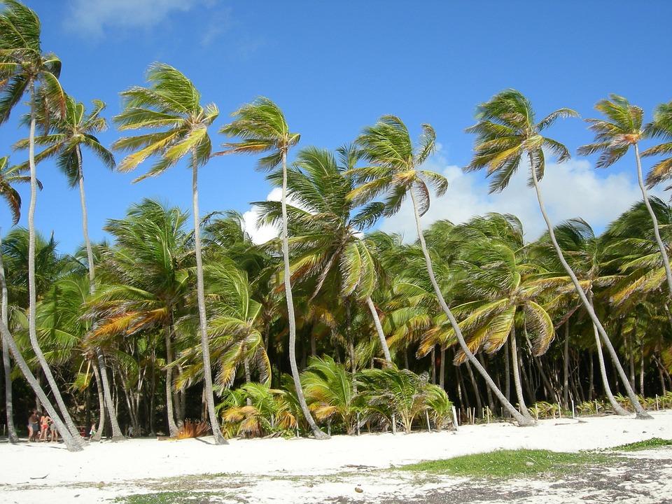 Martinique, Palms, Wind, Beach, Sea, Summer, Holiday