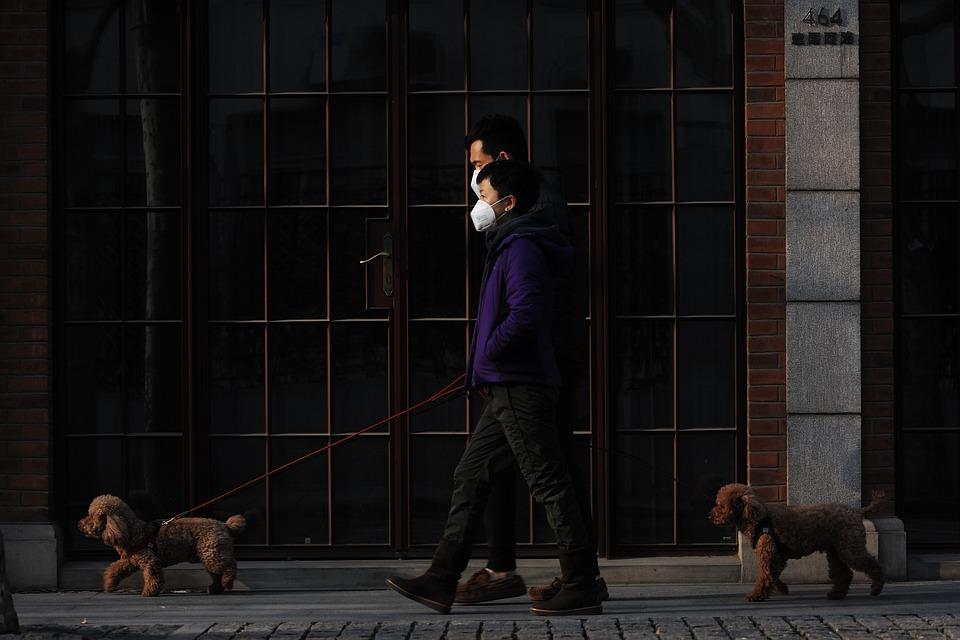 Mask, Walk, Dog, Pet, New Normal, Virus, Pandemic