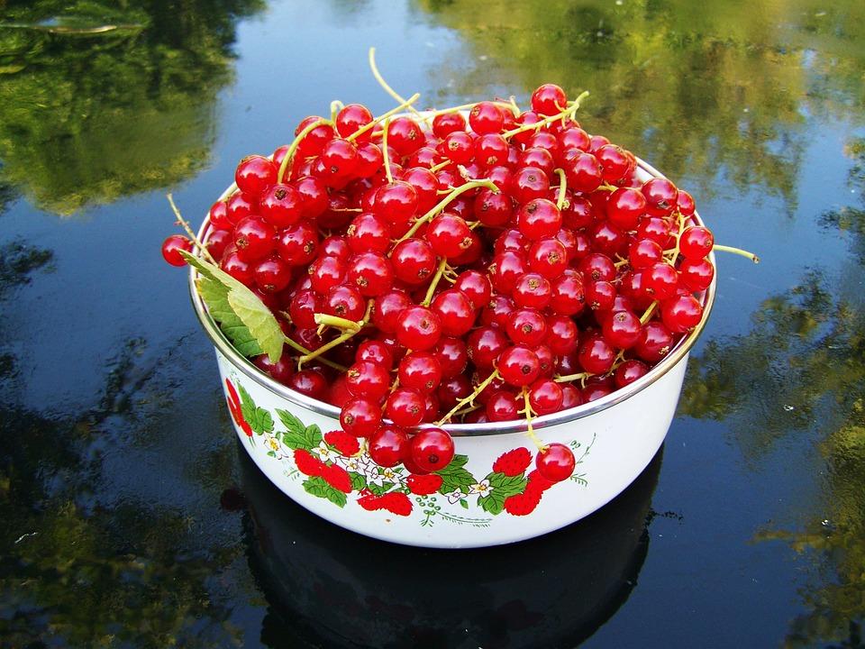 Blackcurrant, Mature, Fruit