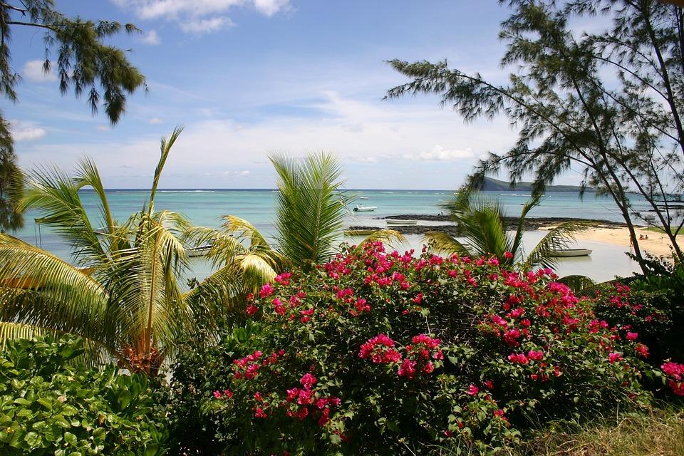 Mauritius, Beach, Palm Trees