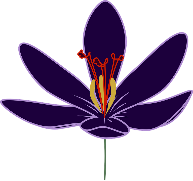 Flower, Magenta, Floral, Crocus, Petals, Mauve