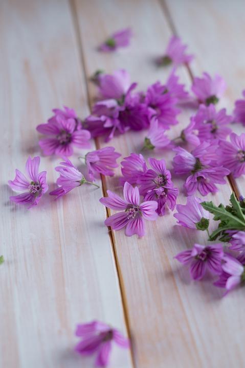 Mauve Spring Flowers Nature Flower Purple Bloom