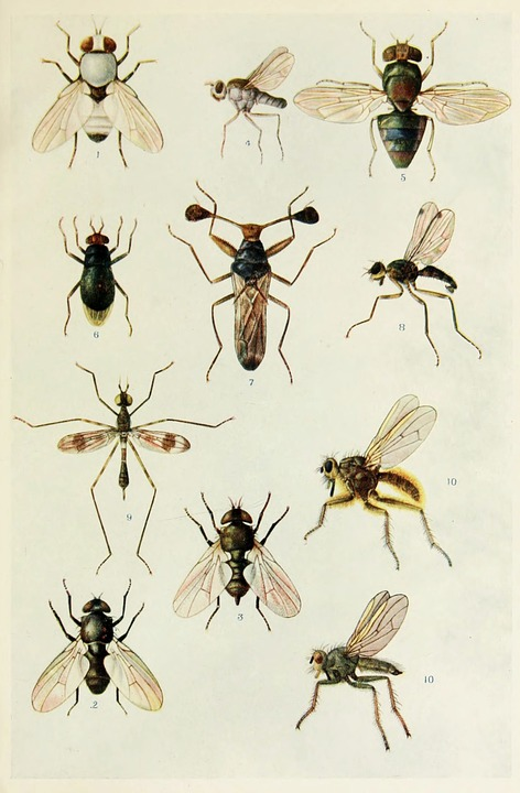 Insects, Tropical, Indian, Life, Harold, Maxwell, Book