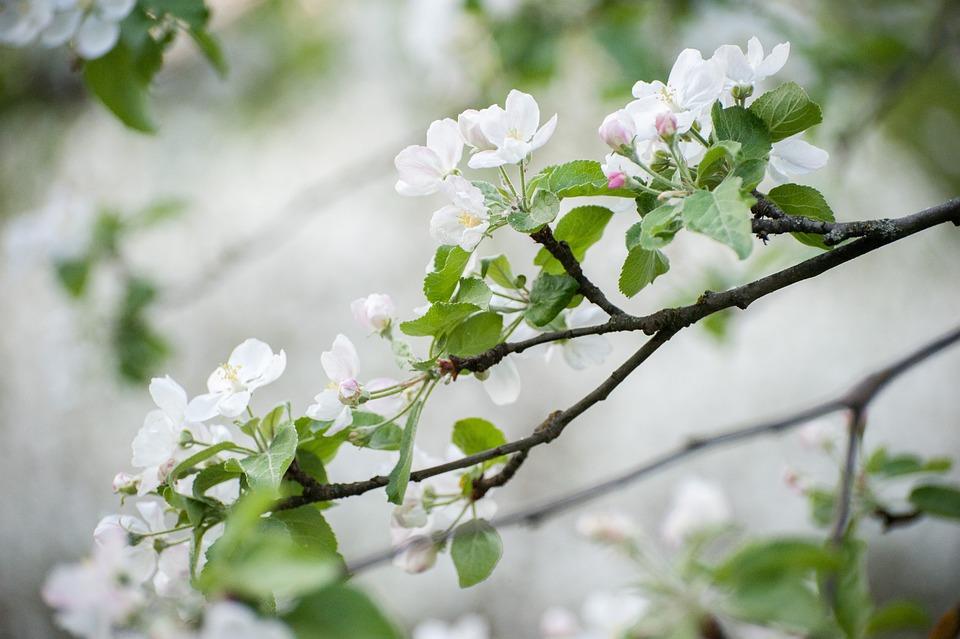 Free photo may flowers flower white flowers spring bloom max pixel spring white flowers may bloom flower flowers mightylinksfo