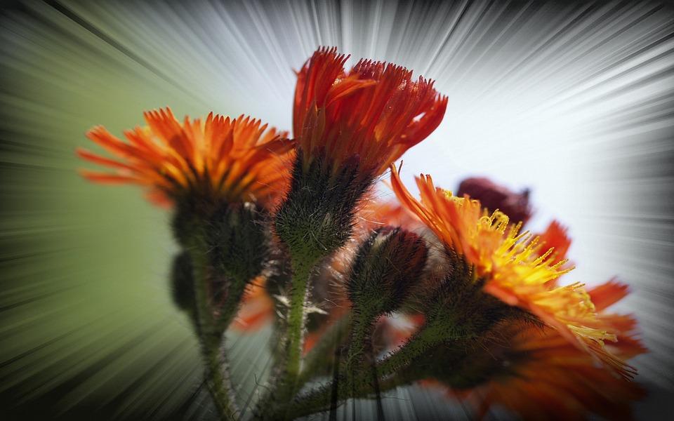 Wildflowers, Flower, Meadow, Frame, Plant, Summer, Art