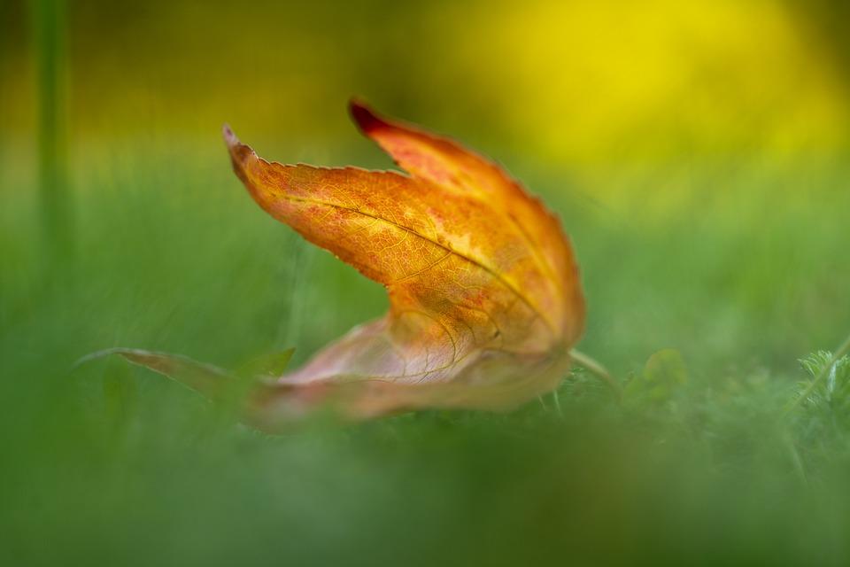 Leaf, Autumn, Season, Botany, Fall, Meadow, Grass