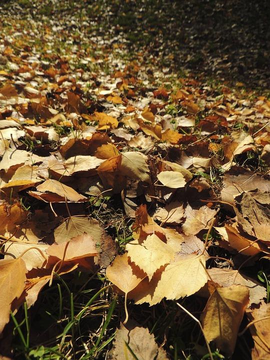 Leaves, Autumn, Ocher, Meadow, Orange, Yellowish