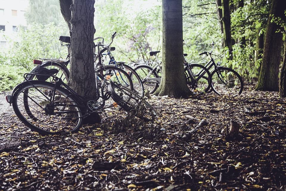 Wheel, Bike, Wheels, Bicycles, Meadow, Shadow, Light