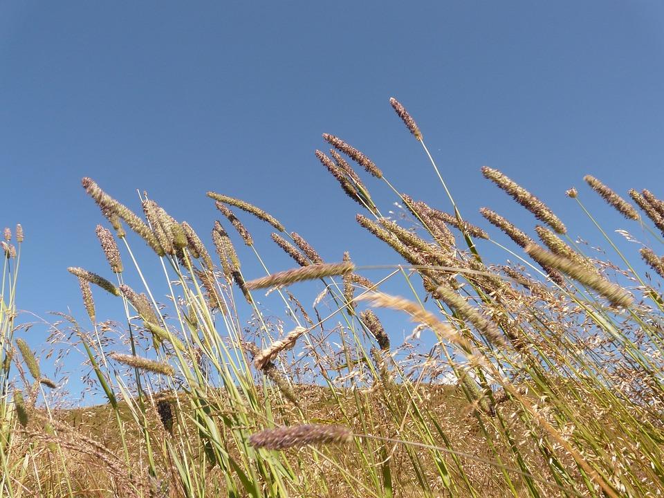 Grass, Grasses, Meadow, Blade Of Grass