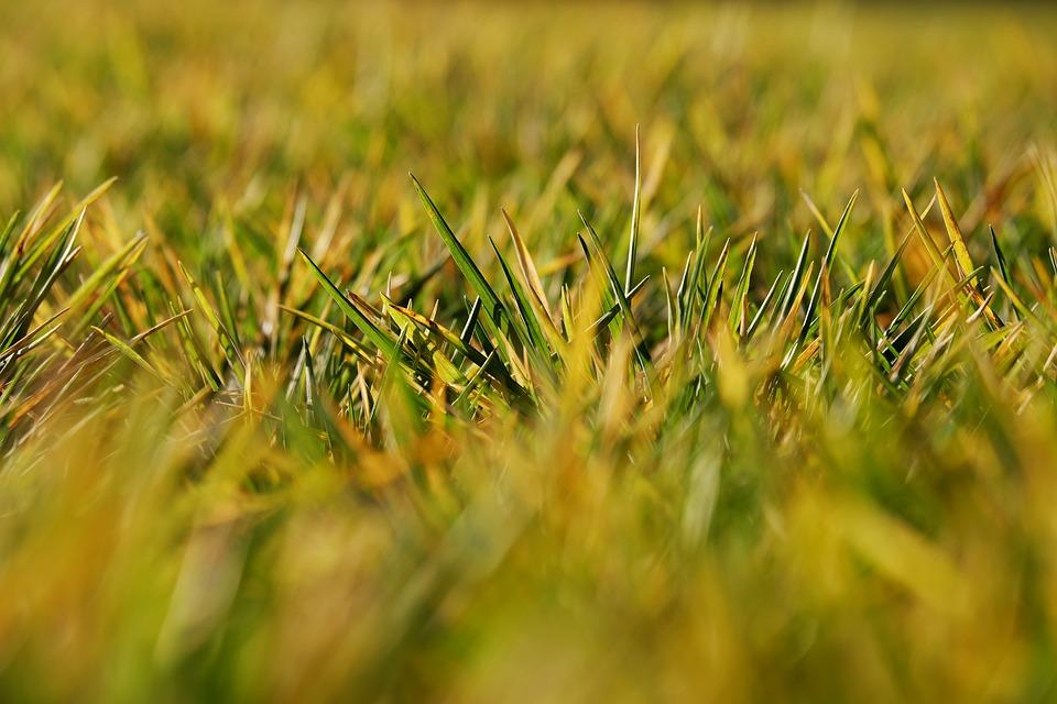 Tiefenschärfe, Depth Of Field, Blur, Meadow, Field