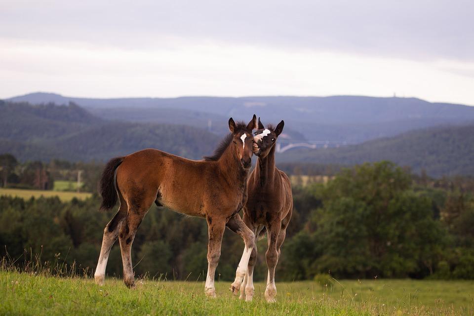 Horse, Brown, Animal, Meadow, Pasture