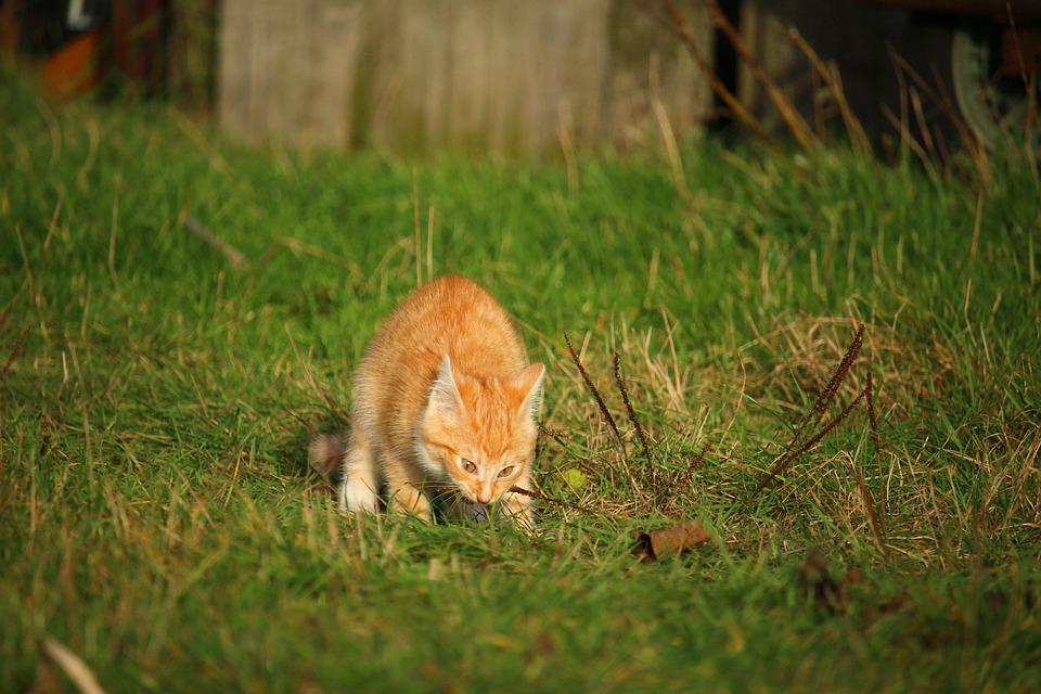 Cat, Kitten, Cat Baby, Meadow, Autumn, Grass