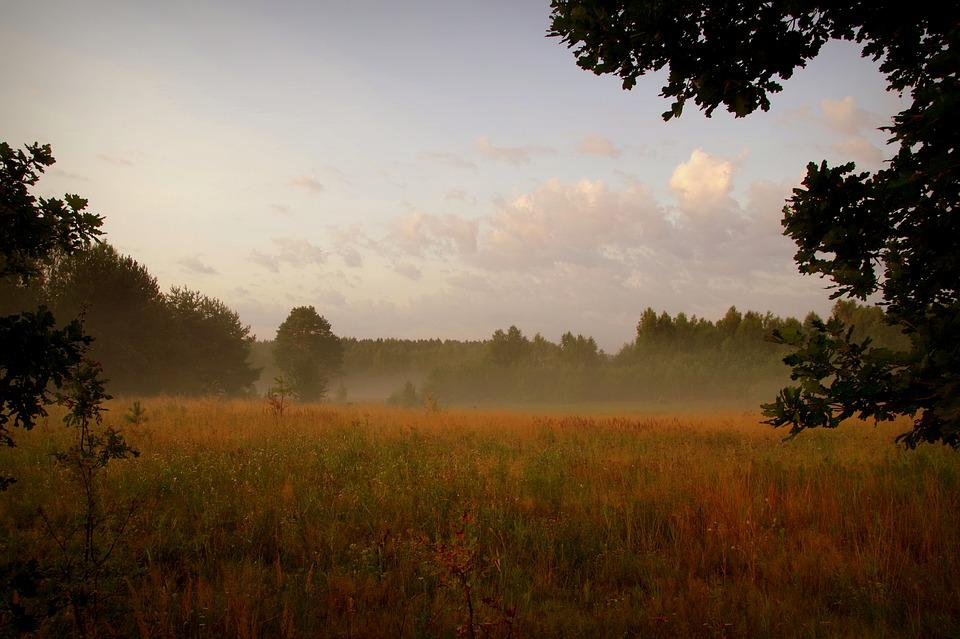 Dawn, The Fog, Forest, Polyana, Meadow, Grass, Nature