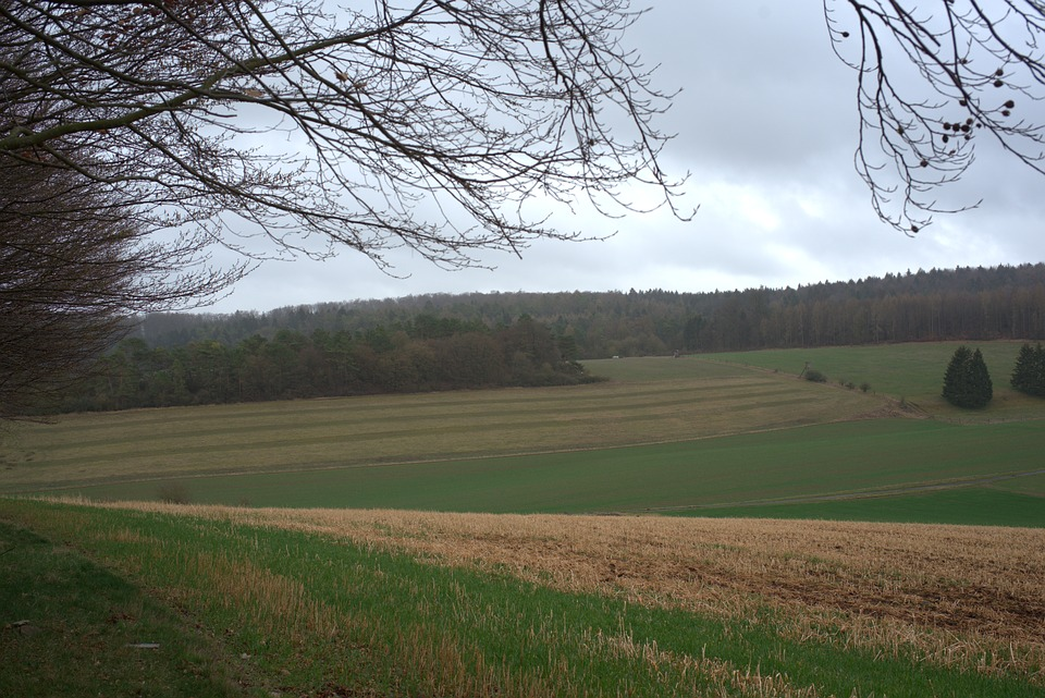 Field, Elbe Mountain, Edge Of The Woods, Meadow, Forest